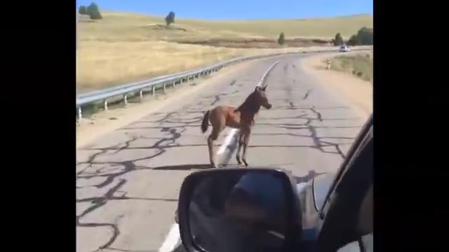 Watch The baby horse saved by strangers in the road. 🐴 :)