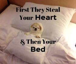 First they steal your heart & then your bed :D