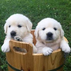 Pupper bucket