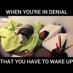 Watch This funny husky definitely doesn't want to get out of bed! :D