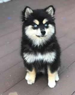 Who loves this gorgeous pup??