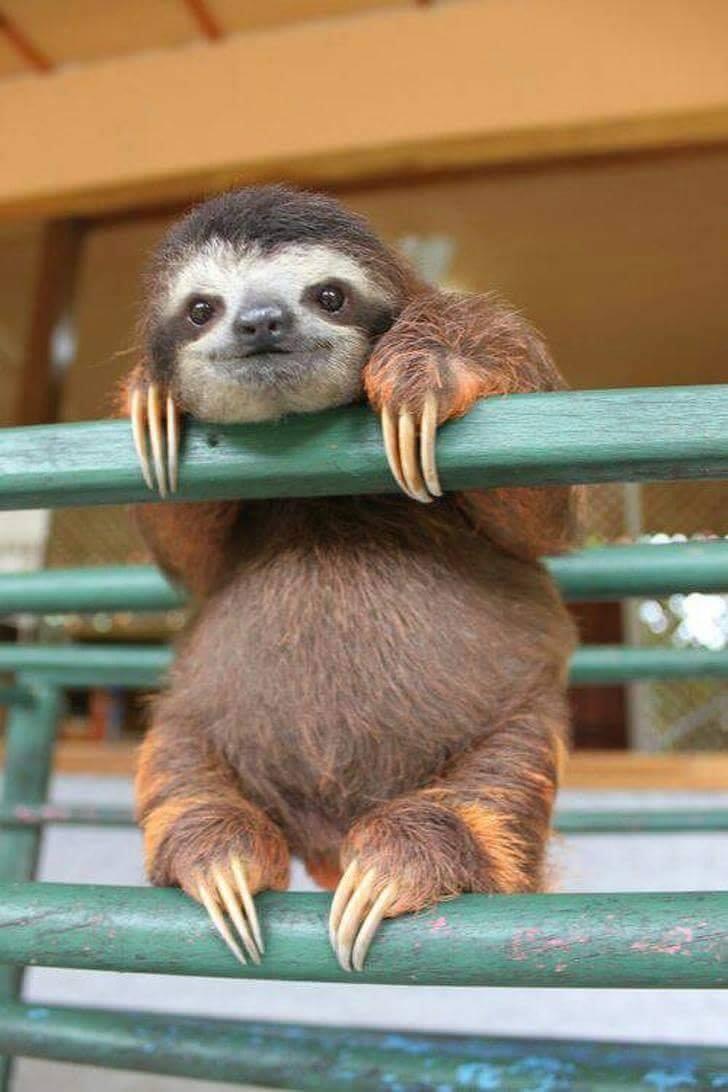 """""""Hi! Got some snacks for me?"""" :)"""