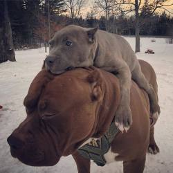 Carry me daddy, Let's go somewhere  :)