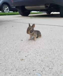 Look at this teeny tiny bunny. :)