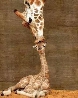 Mother is always mother