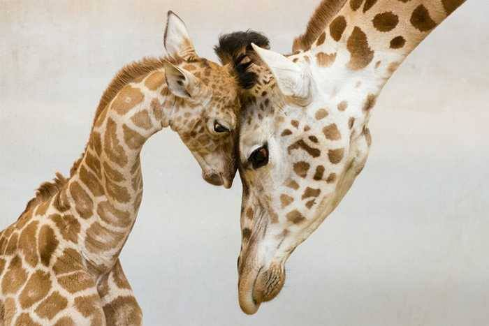 Nothing feels more safe than knowing your mother is there… <3 <3 <3
