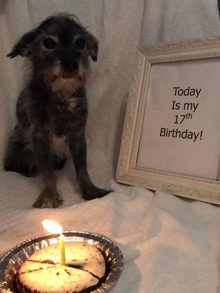 """Please help me wish my sweet boy Max a very happy 17th birthday!!""  Happy birthday, ..."