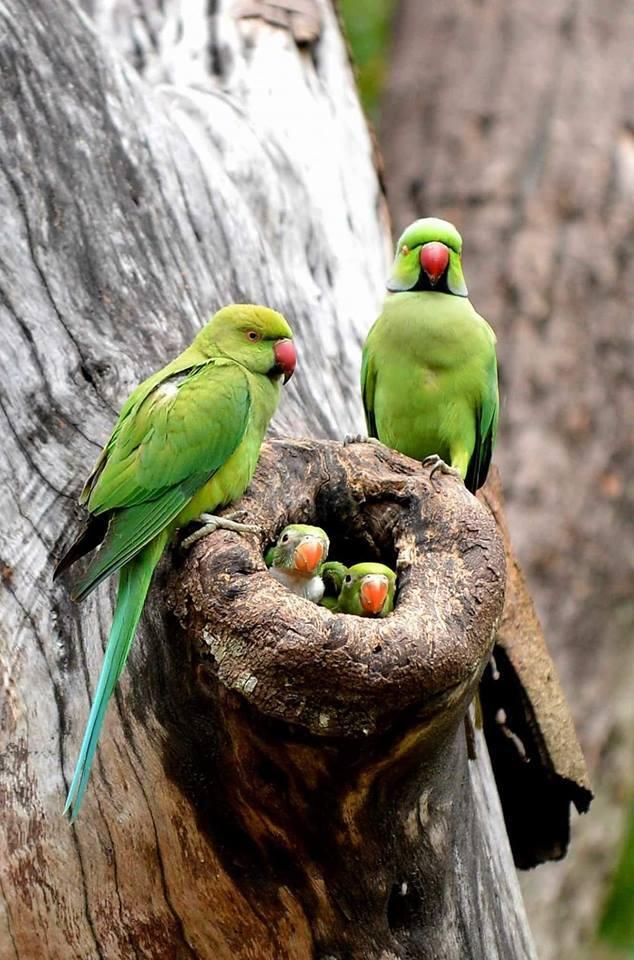 Beautiful Parrot Family