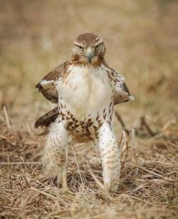 Boss Hawk! :D