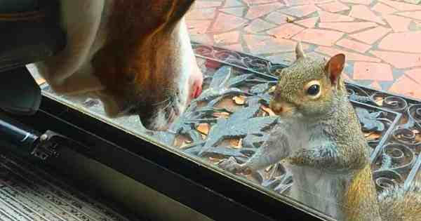 For 8 Years A Squirrel Taps Window Every Day! Finally The Family Understands What It Wants To Show