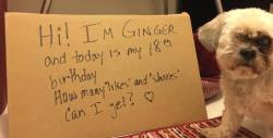 Happy Birthday Ginger!   18 Wow! You got my like and share!