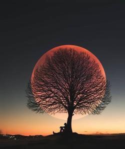 Moon Tree in Turkey