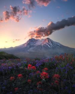 Peaceful fields full of flowers below Mount St Helens