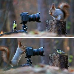 Russian photographer captures the cutest squirrel photo session ever: