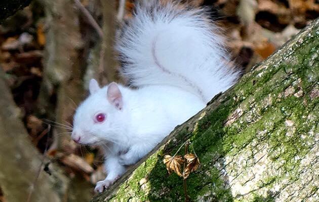 Albino squirrel! :o