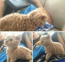I've NEVER seen a kitten like THIS before… Have you??!