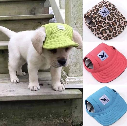 ADORABLE! Custom Made Machiko Dog Hats… ADORABLE!  Who says dogs can't make a fashio ...
