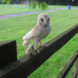 """""""Baby owl and mother…"""""""