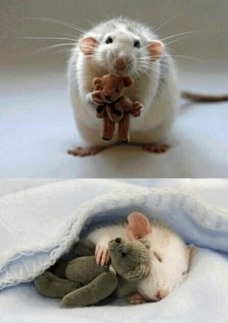 For anyone feeling a bit sad, here's a picture from a woman who makes Teddy Bears for her  ...