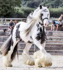 From ears to hooves, this horse is stunningly gorgeous.