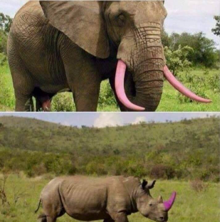 One of the best things I've seen in awhile. They use the same pink dye that is attached to stole ...