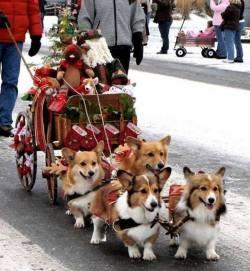 Reindeer subs pull Santa's sleigh!