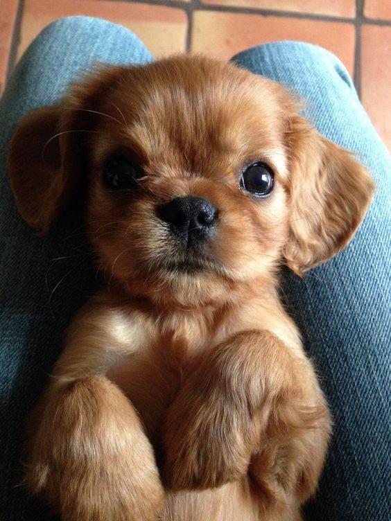 SO adorable! <3