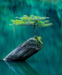SURVIVOR, A lonely tree in nature