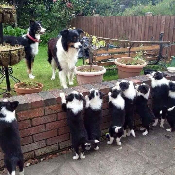 What an adorable Big Family