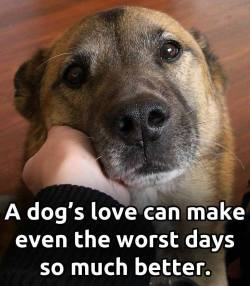 A dog's love make even the worst days so much better.