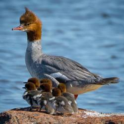 Amazing Family