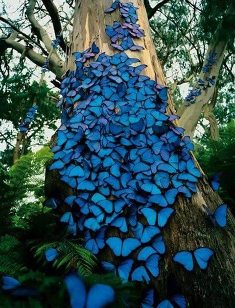 Butterflies in the Amazon Rainforest