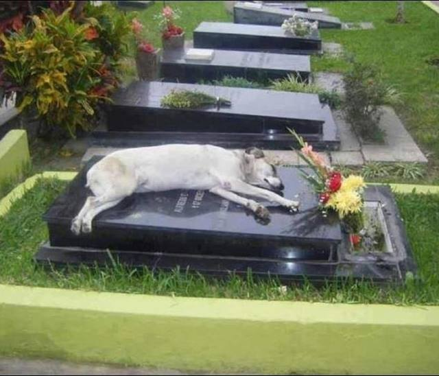For the past 6 years, a dog named Capitan has slept in the grave of his owner every night. His o ...
