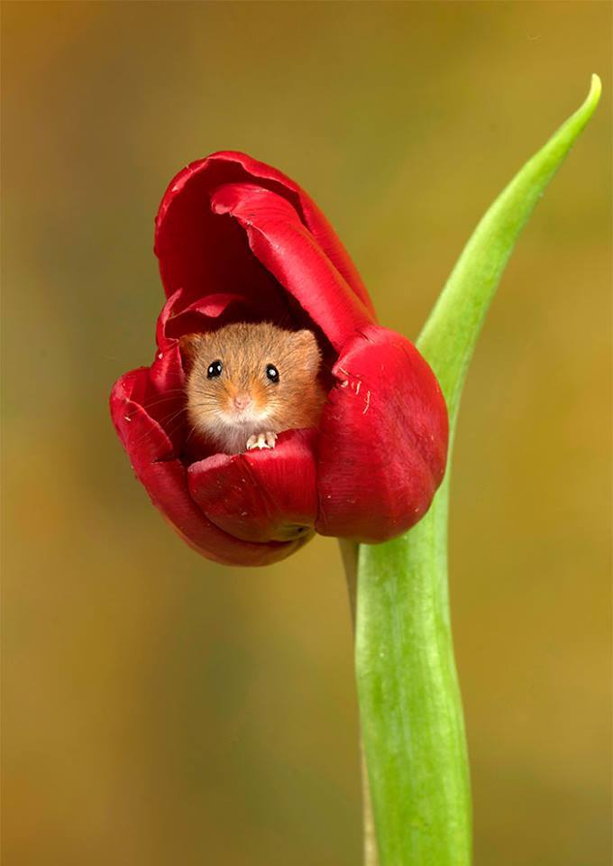 Harvest mice played inside the flowers near his home in Bournemouth, Dorset.