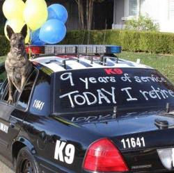 I'm K9 and my 9 years of service, Today i retire.   Say one word for this hero.