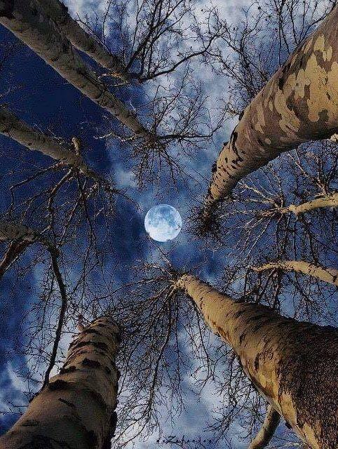 Lovely capture of the moon.