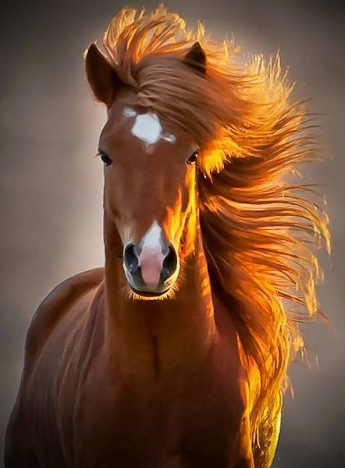 """""""Probably the most photogenic horse in the world."""""""