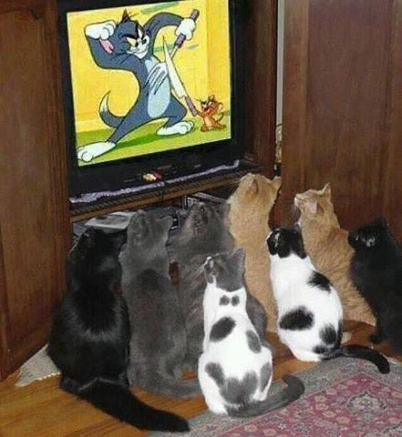 They are watching there favorite cartoons.