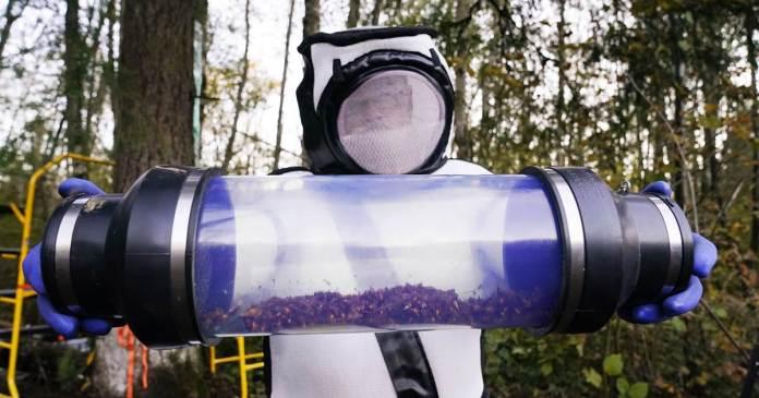 First 'murder hornet' nest in U.S. destroyed, officials say