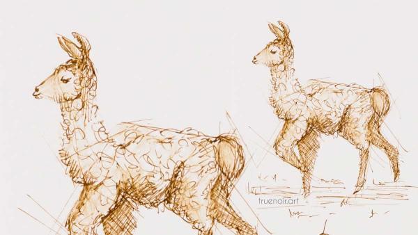 .044 Baby Llama, pen drawing, header image