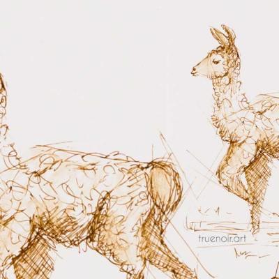 .044 Baby Llama, pen drawing