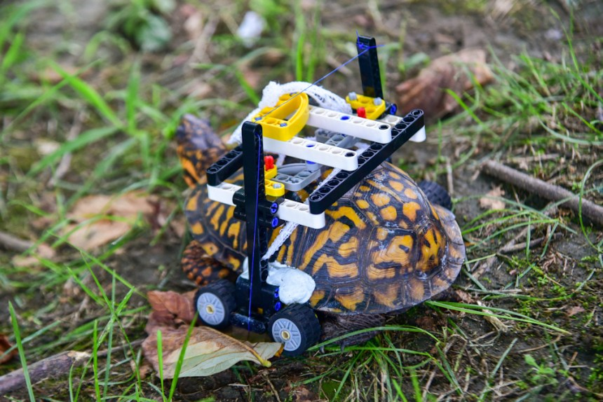 LEGO® Turtle in his wheelchair.