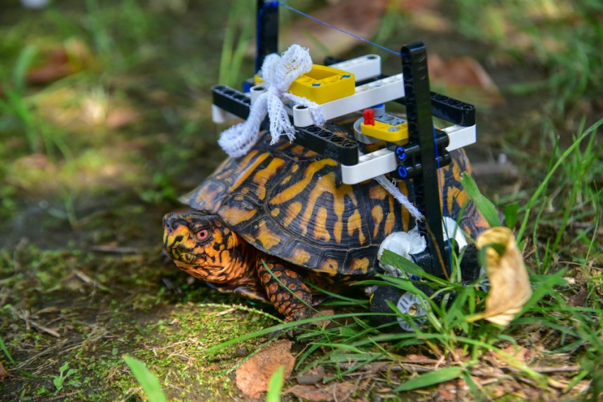 The Story of LEGO® Turtle involves a wheelchair built from Technic elements.