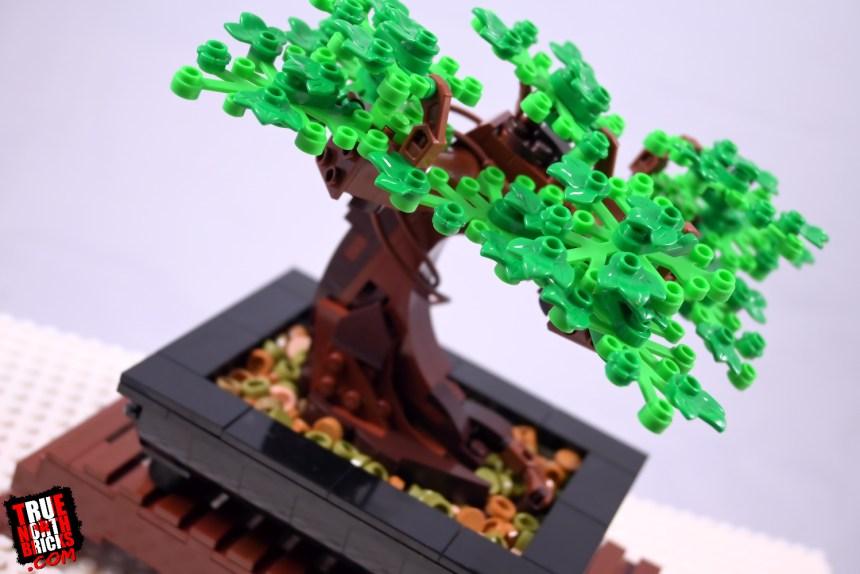 Bonsai Tree (10281)