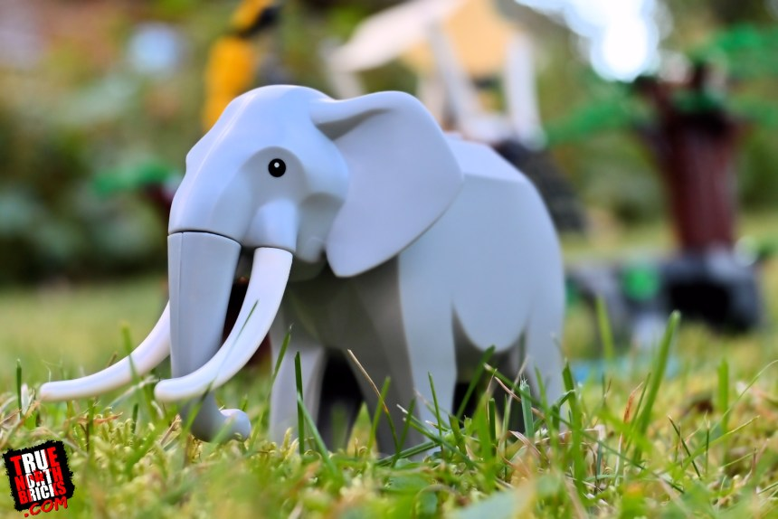 Elephant from Wildlife Rescue Camp (60307)