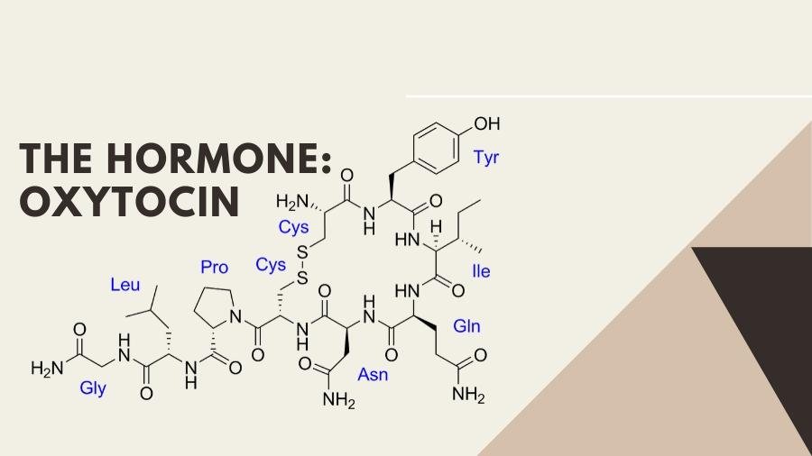 The hormone: Oxytocin