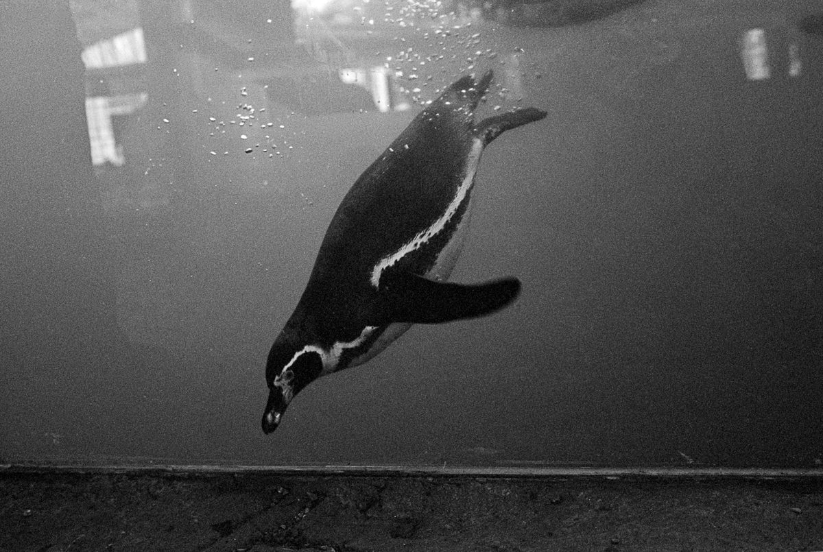 Documentary & Editorial photographer Penguin