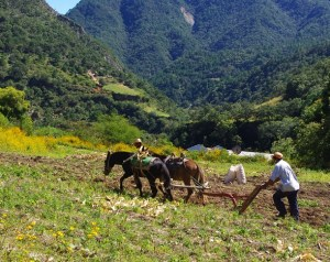 We saw some local farmers tilling the soil with two donkeys.