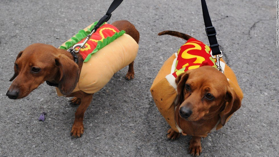 Can My Weiner Dog Dtand Up To Big Dogs