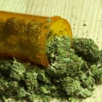 WASTED: The Average Legal Pot User Spends $647 a Year on Weed